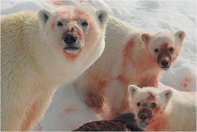 Бурый медведь - Самые опасные животные