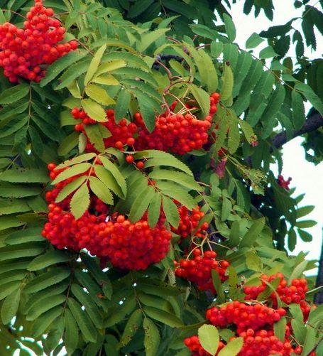 виды деревьев россии с фото и названиями