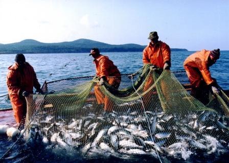 Краткий обзор промысла прибрежных биоресурсов в Северо-Охотоморской и Западно-Камчатской подзонах Охотского моря